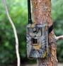 Фотоловушка Филин Джет на дереве смотреть